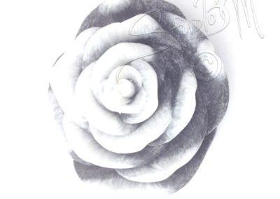 Růže - B&W
